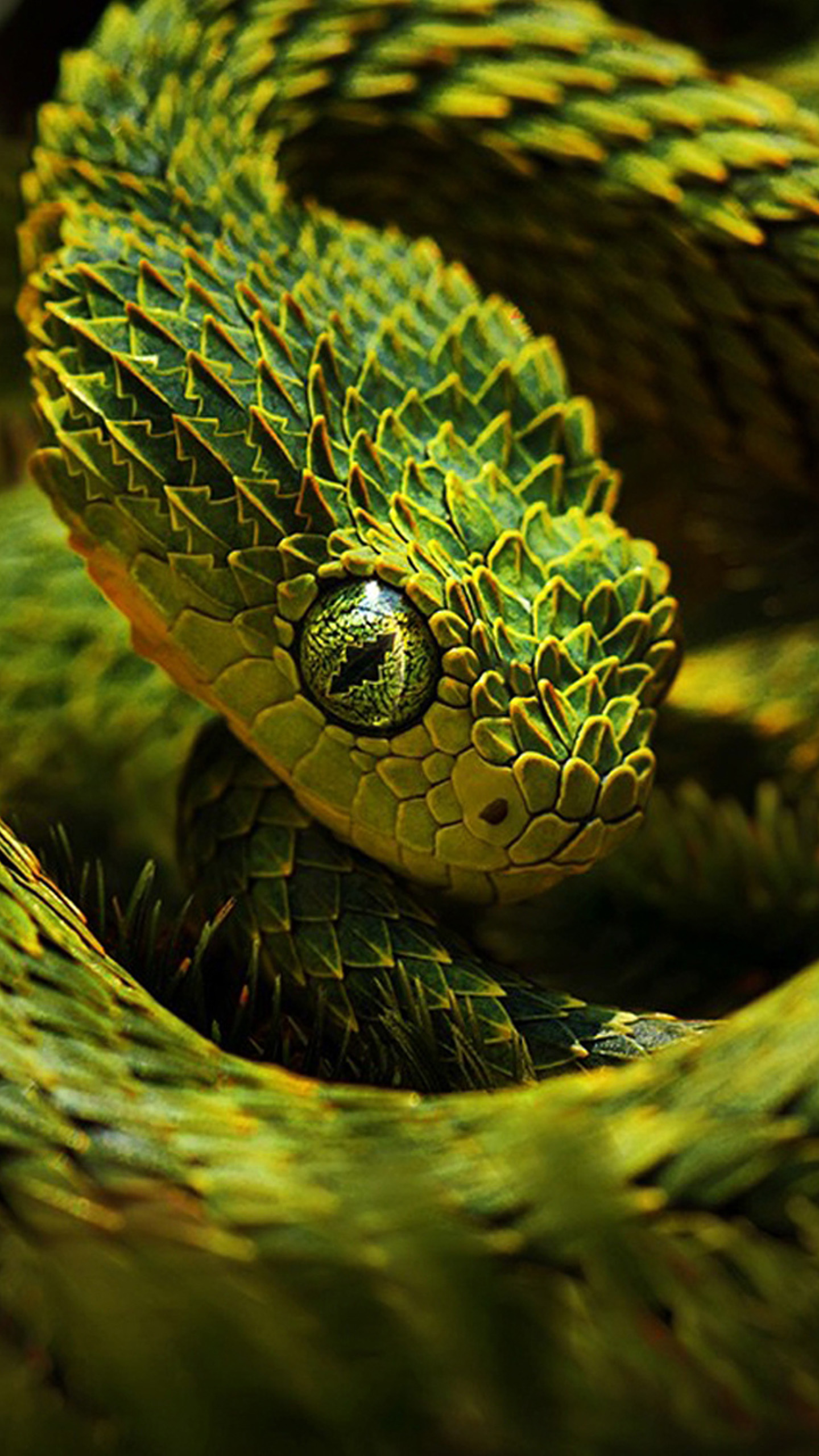 Green snake 02 galaxy f - Green snake hd wallpaper ...